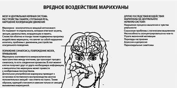 Психическое воздействие марихуаны
